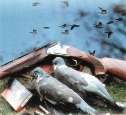 Голубь — тоже объект охоты