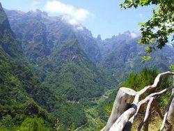 Горные склоны острова покрыты лесами