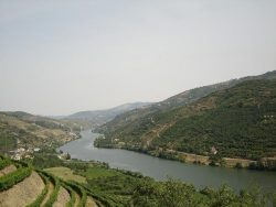 Виноградники в долине Дору